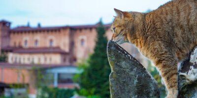 условное наклонение в итальянском языке